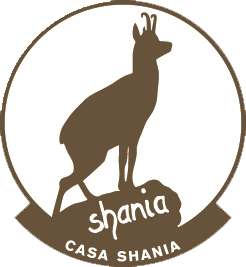 Casa Shania - News Article